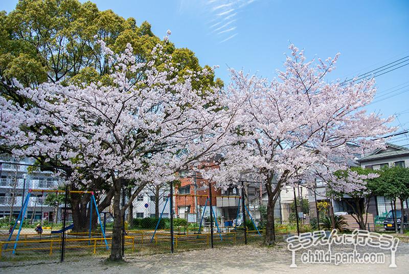 福岡市中央区 福崎公園の桜