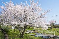 金武アメンボ池公園