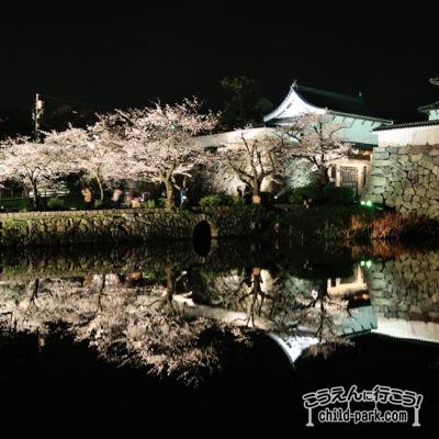 写真舞鶴公園の夜桜