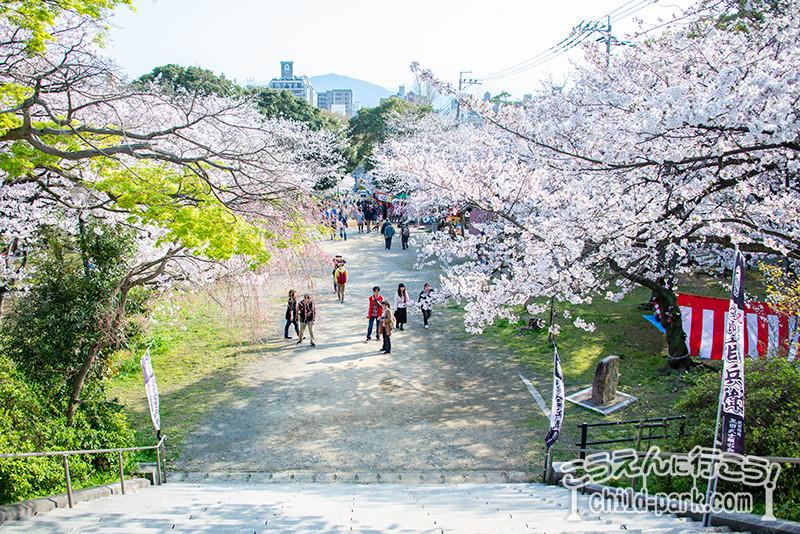福岡市中央区西公園のお花見シーズン