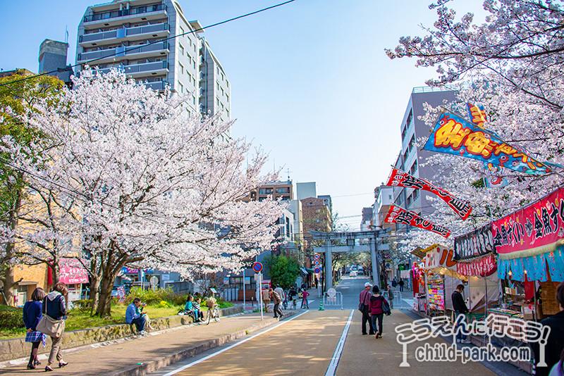 福岡市西公園のお花見シーズン
