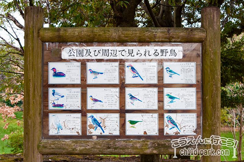 西南杜の湖畔公園 野鳥